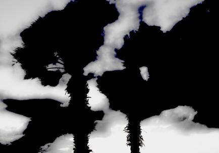 ביום חורף גרוע במיוחד  Breaking Skies  צילום: רענן בן-טובים
